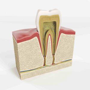 ساختار مینا و عاج دندان